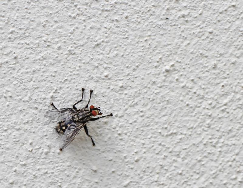 fly-white-wall-155389648