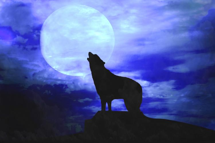 howl-at-the-moon-day-and-night-fun1